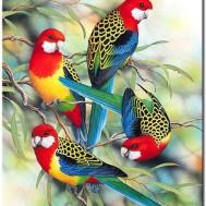 Leveranstid 1,5v - Fåglar, fyrkant 30x40cm