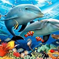 Delfin par, fyrkant 80x60cm