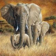 1,5-2v leveranstid - Elefant familj, fyrkantig 80x60cm