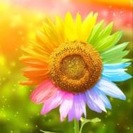 I solljuset blomma, fyrkant 50x50cm