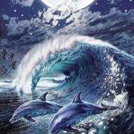 Delfin lek, fyrkantig 60x80cm
