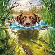 hund i vassen, fyrkantig 40x50cm
