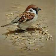 Fågel brun, fyrkantig 40x40cm