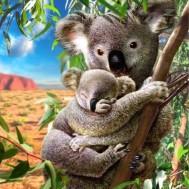 Koalor, fyrkantig 30x40cm