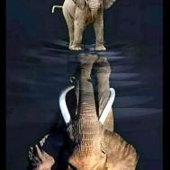 Elefant i spegelbild, fyrkant 50x60cm