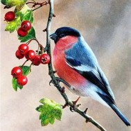 Fåglar Rönnbär, fyrkant 40x40cm