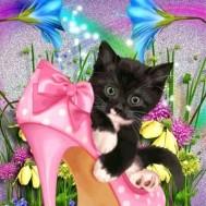 Kattunge i sko, fyrkantig 40x50cm