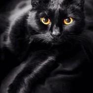Svart katt, fyrkantig 50x70cm