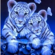 Tiger bebisar fjäril, fyrkantiga 30x40cm