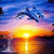 Delfin hopp, fyrkantig 40x30cm