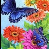 Fjärilar, fyrkant eller rund 25x30cm