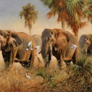 Elefant vandring, fyrkantig 80x60cm