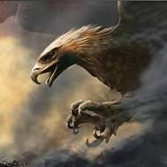 Falken, fyrkantig 80x60cm