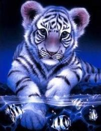 Tiger bebis fiskar, fyrkantig 30x40cm -