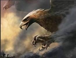 Falken, fyrkantig 80x60cm -