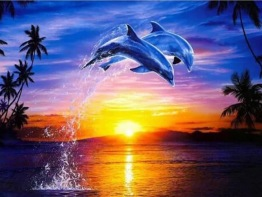 1,5-2v leveranstid - Delfin hopp - 40x30cm