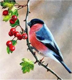 Fåglar Rönnbär, fyrkant 40x40cm - Fåglar rönnbär