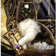 Katt timglas, fyrkantig 50x70cm