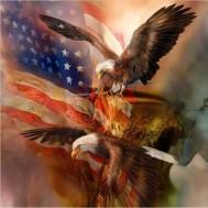 Usa eagle, fyrkantig 50x50cm