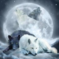 Leveranstid 1,5-2v, Diamondpainting, diamant tavla Vargar i fullmåne, fyrkantig 50x50cm