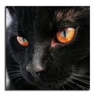 Katt svart, rund 50x50cm