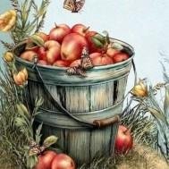 Äppel hink, fyrkant 40x50cm