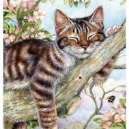 Katt sovande träd, fyrkant 40x50cm