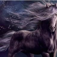 Häst, fyrkant 60x50cm