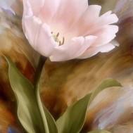 Ros rosa, fyrkant 30x50cm