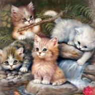 Katter leker, fyrkant 50x60cm