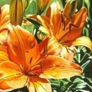 Blomma, fyrkant 50x70cm