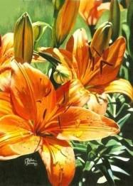 Blomma, fyrkant 50x70cm -
