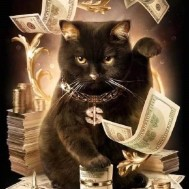 Katt Cash is king, fyrkant 50x70cm