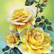 Rosor gul, fyrkant 40x50cm