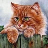 Katt på staket, fyrkant 50x40cm