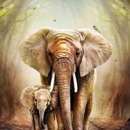 Elefanter, fyrkant 40x50cm