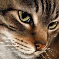Katt, fyrkant 40x40cm