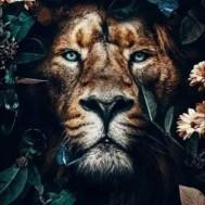 Lejon, fyrkant 50x70cm