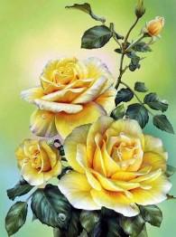 Rosor gul, fyrkant 40x50cm -