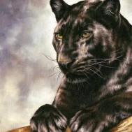 Panther Bagheera, fyrkant 40x50cm