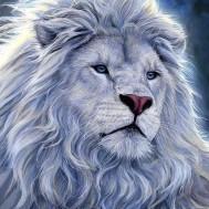 Lejon Astlan, fyrkant 40x50cm