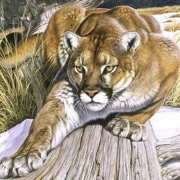 Puma, fyrkant 50x50cm -