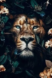 Lejon, fyrkant 50x70cm -