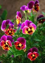 Blommor lila, fyrkant 40x50cm -