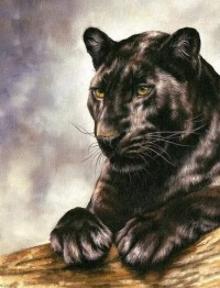Panther Bagheera, fyrkant 40x50cm -