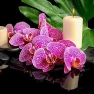 Orchidé ljus, rund 50x40cm