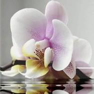 Orchidé, rund 40x40cm