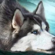 Husky, rund 50x40cm