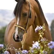 Häst i blommor, rund 40x50cm