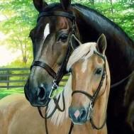 Hästar, rund 40x50cm